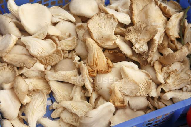 Oyster Mushrooms on Display — Stock Photo
