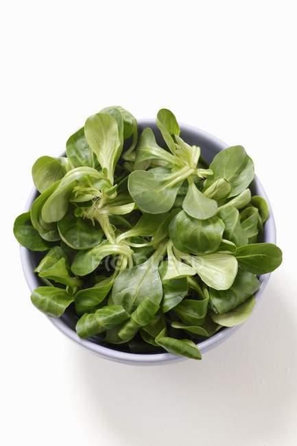 Свіжі ягнят салат в миску — стокове фото