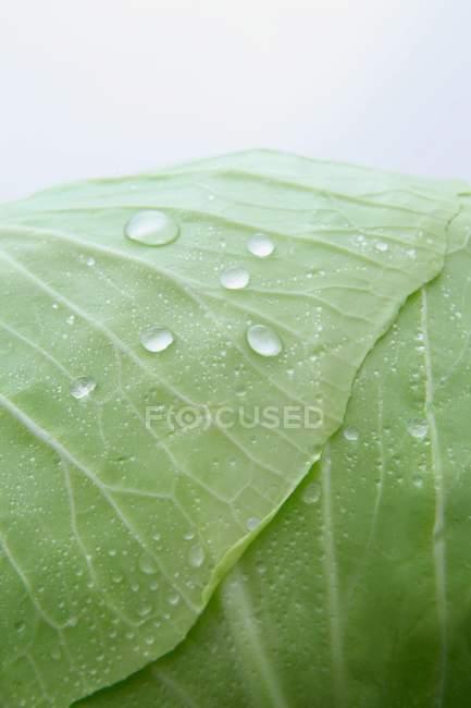 Freshly washed cabbage — Stock Photo