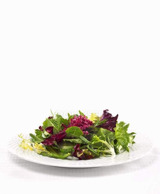 Insalata biologica mista guarnita con barbabietola da ghiaccio su piatto bianco — Foto stock
