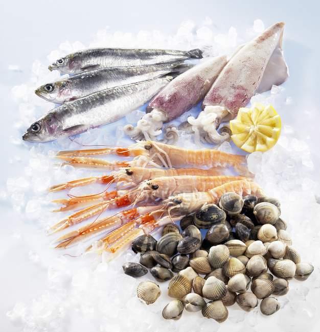 Свежие сардины с кальмарами и мышц — стоковое фото