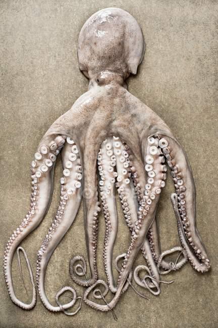 Весь осьминог, макро — стоковое фото