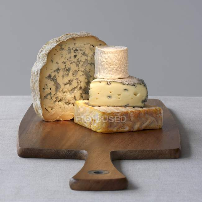 Four varieties of cheese — Stock Photo