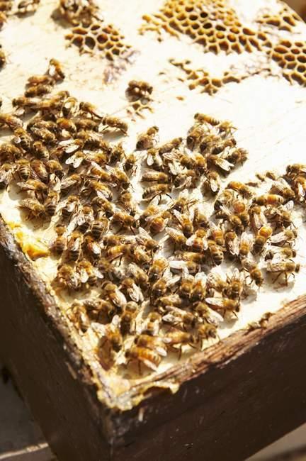Detailansicht der Bienen im Bienenstock Abdeckung — Stockfoto