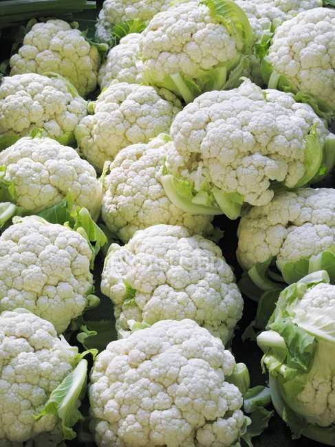 Cauliflowers, close-up view — Stock Photo