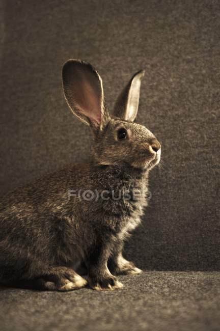 Обрезанный вид одной живой кролик — стоковое фото