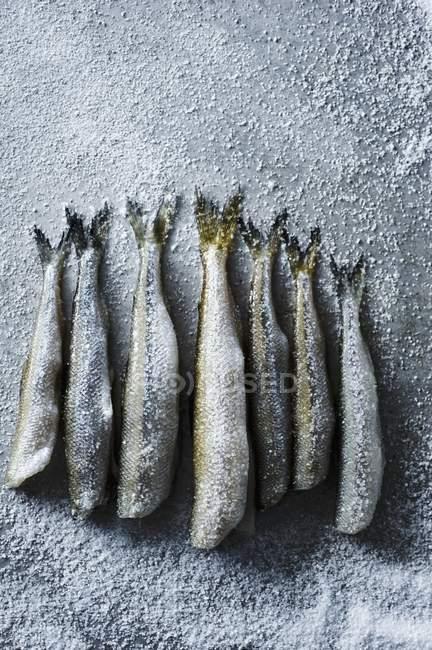 Freschi puzzava cosparso di sale marino — Foto stock