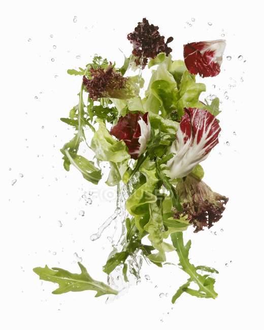 Салат листя митий — стокове фото