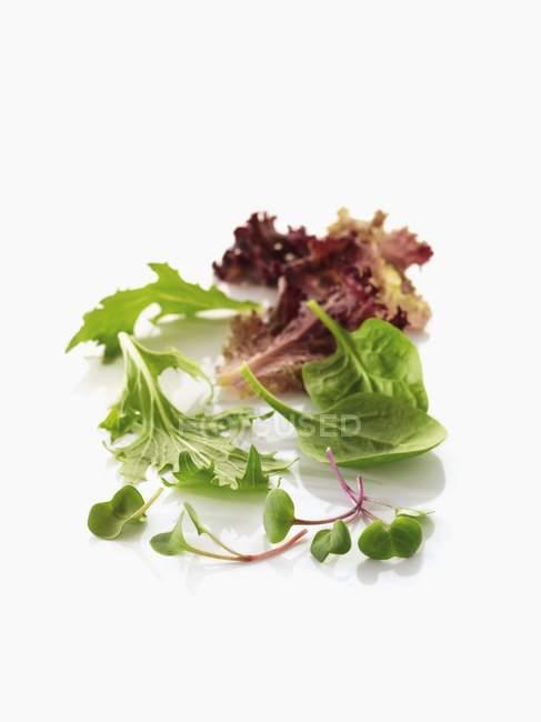 Germogli di ravanello e foglie di insalata — Foto stock