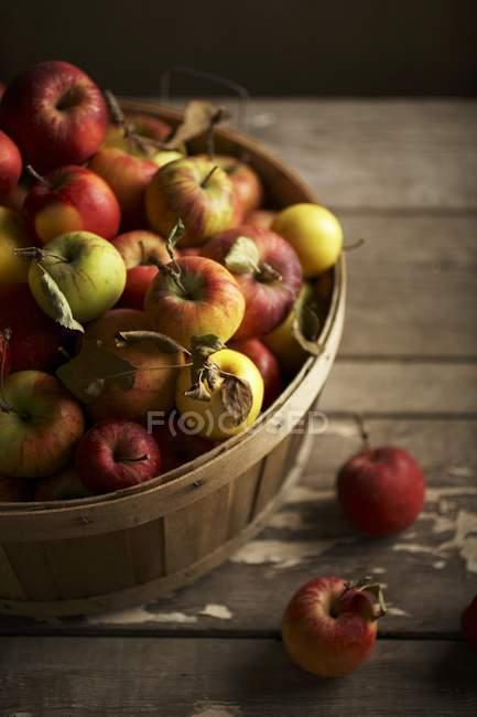 Корзина спелых яблок — стоковое фото