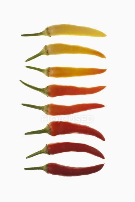 Rangée de piments rouges — Photo de stock