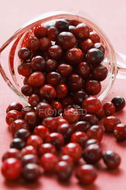 Cranberries cadendo dal misurino — Foto stock