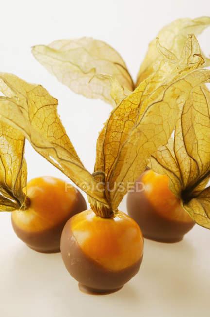 Chocolate-coated physalis berries — Stock Photo