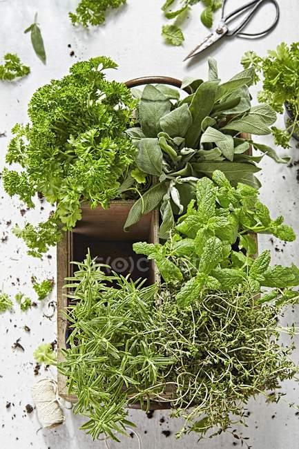Herbes fraîches dans caisse en bois — Photo de stock