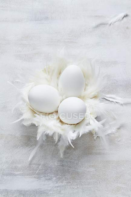 Goose eggs with feathers — Stock Photo