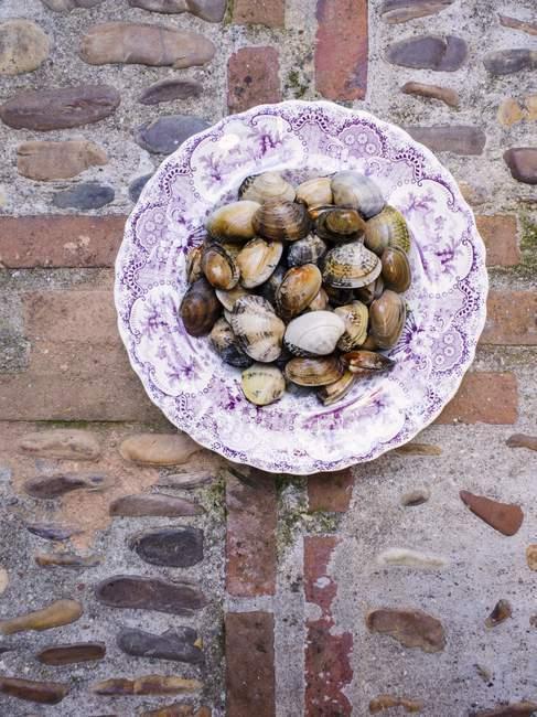 Placa de mejillones sobre piedra - foto de stock
