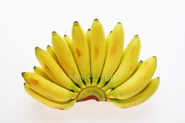 Пучок банану цукру — стокове фото