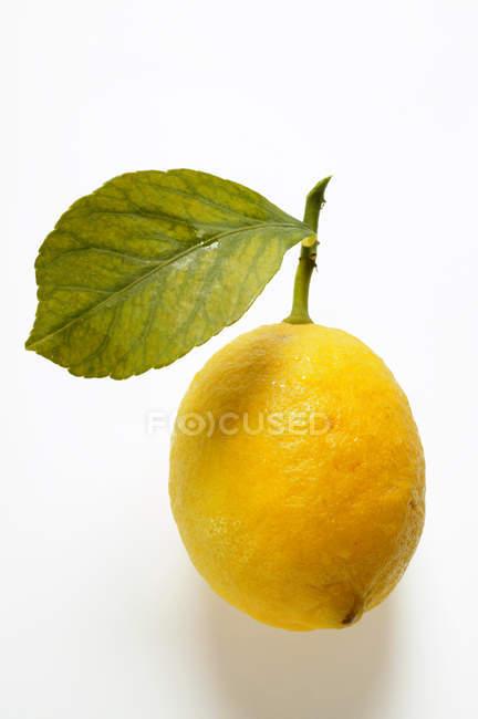 Zitrone mit Stiel und Blatt — Stockfoto