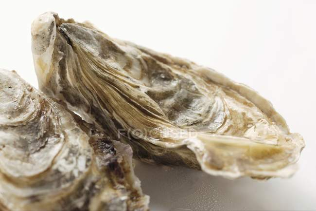 Fresh oysters, close-up — Stock Photo