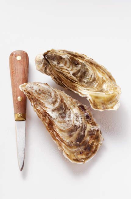 Huîtres fraîches avec couteau à huîtres — Photo de stock