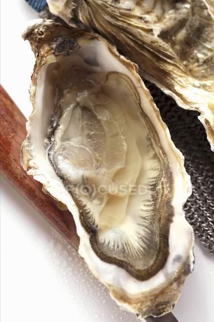 Aberto de ostra e faca — Fotografia de Stock