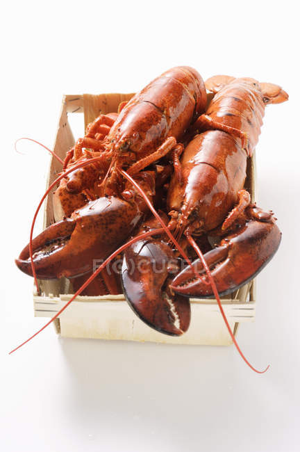 Lobster in woodchip basket — Stock Photo