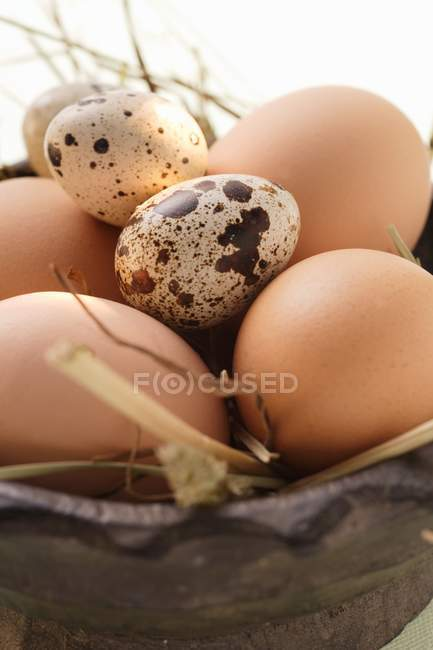 Brown eggs and feather — Stock Photo