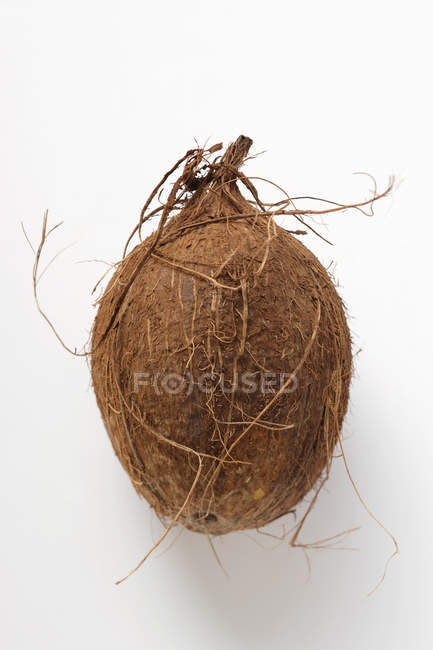 Свежие спелый кокос — стоковое фото
