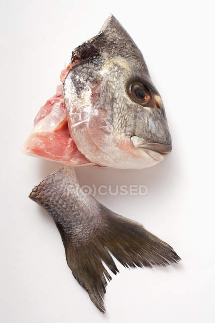 Fresh Sea bass head and tail — Stock Photo