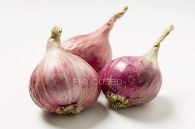 Tres cebollas rojas - foto de stock