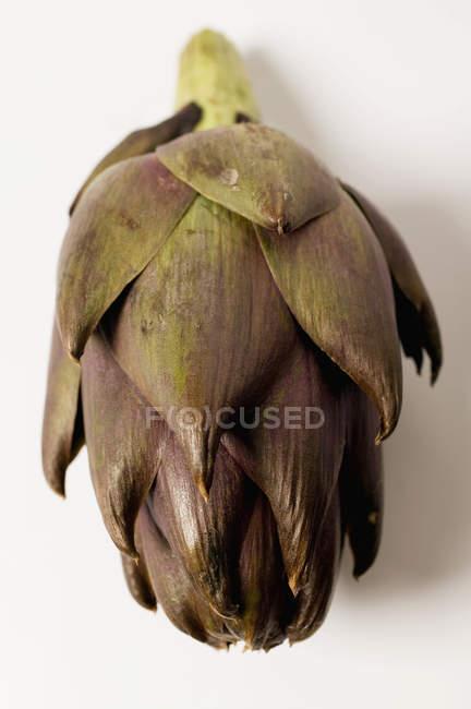 Топинамбур свежий фиолетовый — стоковое фото