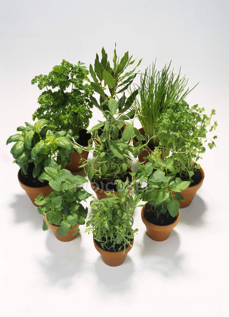 Various green herbs in pots — Stock Photo