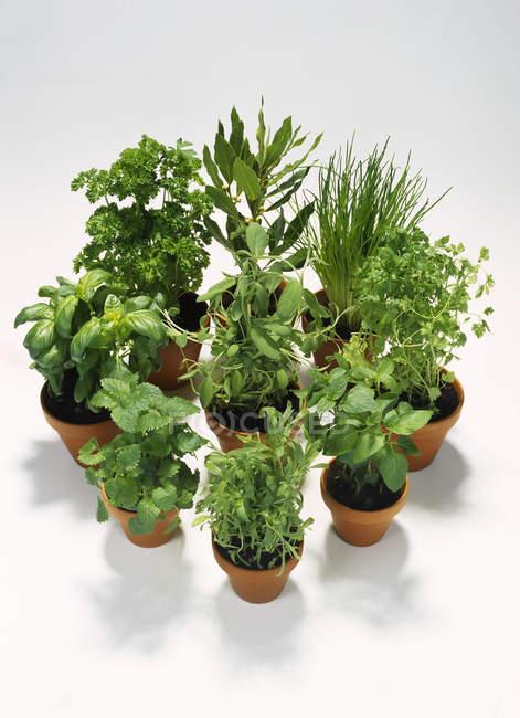Varie erbe verde in vaso — Foto stock