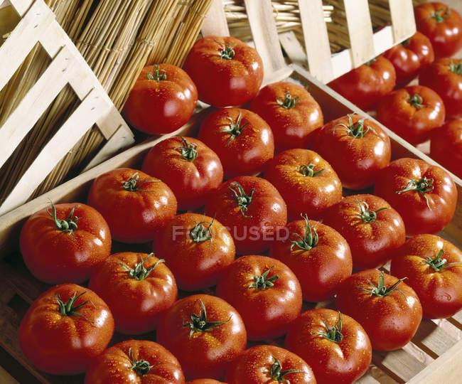 Tomates avec gouttes d'eau — Photo de stock