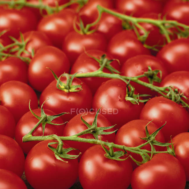 Fresh ripe tomatoes with stalks — Stock Photo