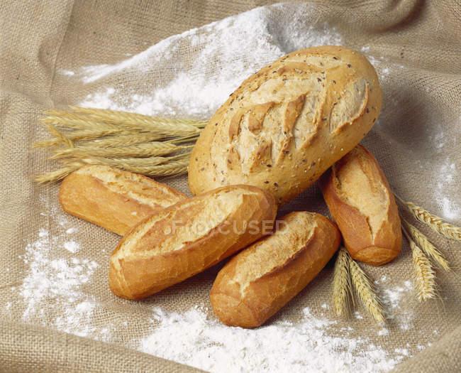 Pane bianco e orecchie del cereale — Foto stock