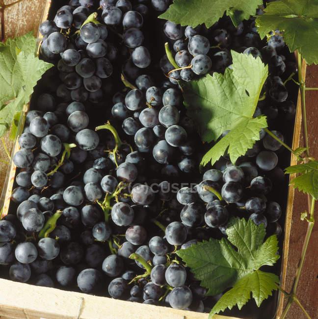 Cassa di uva da tavola — Foto stock