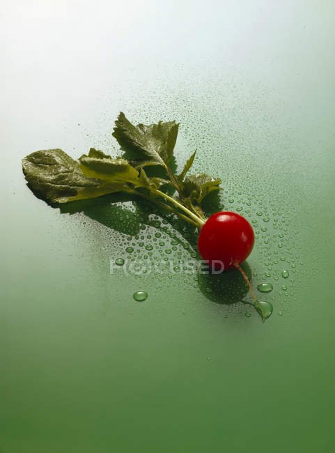 Radish with drops of water — Stock Photo