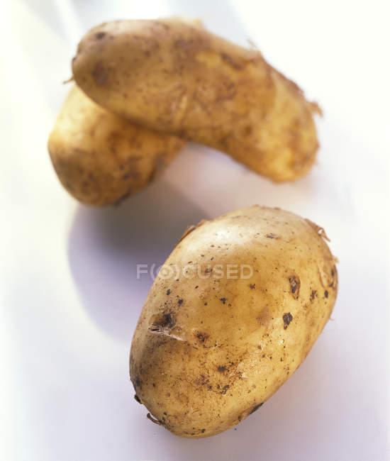 Drei italienische Spunta Kartoffeln — Stockfoto
