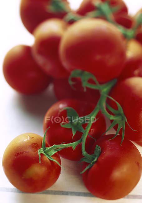 Помідори свіжого винограду — стокове фото
