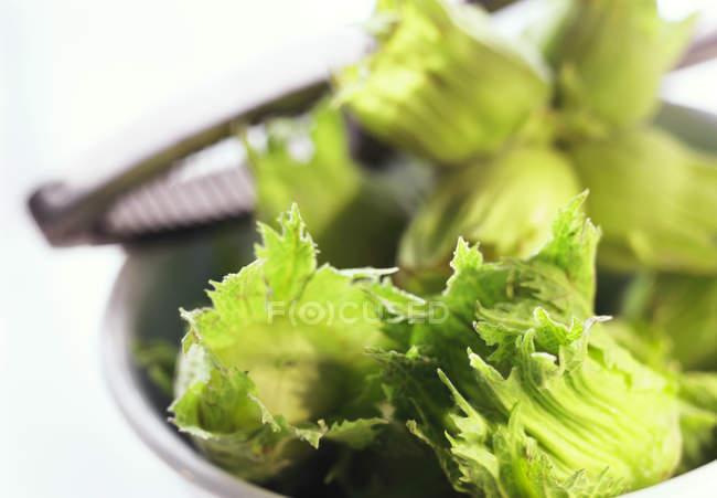 Cáscara de avellanas con hojas - foto de stock