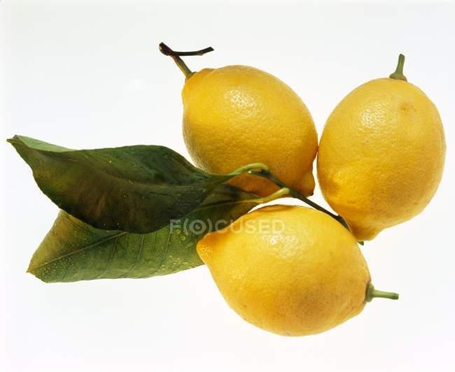 Drei Zitronen und Zitronenblätter — Stockfoto