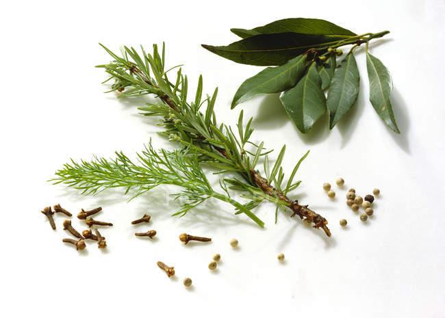 Hierbas y especias frescas - foto de stock