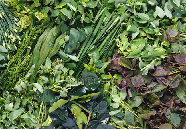 Closeup view of different fresh herbs — Stock Photo