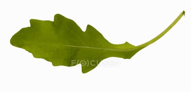 Зеленый лист ракеты — стоковое фото