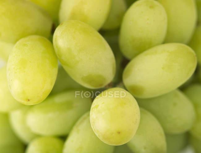 Uvas verdes frescas - foto de stock