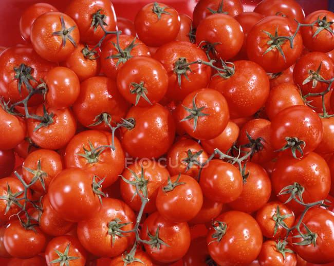 Vine ripe tomatoes — Stock Photo