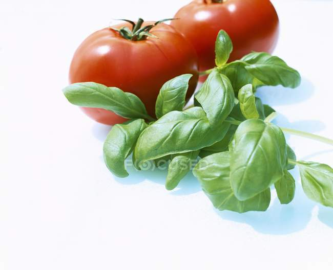 Fresh basil and tomatoes — Stock Photo