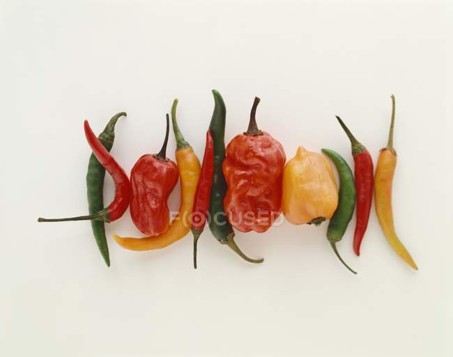Various types of chilli — Stock Photo
