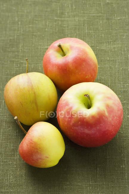 Four fresh ripe apples — Stock Photo